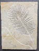 Pflanzen (Plantea)