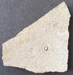 Phymosoma